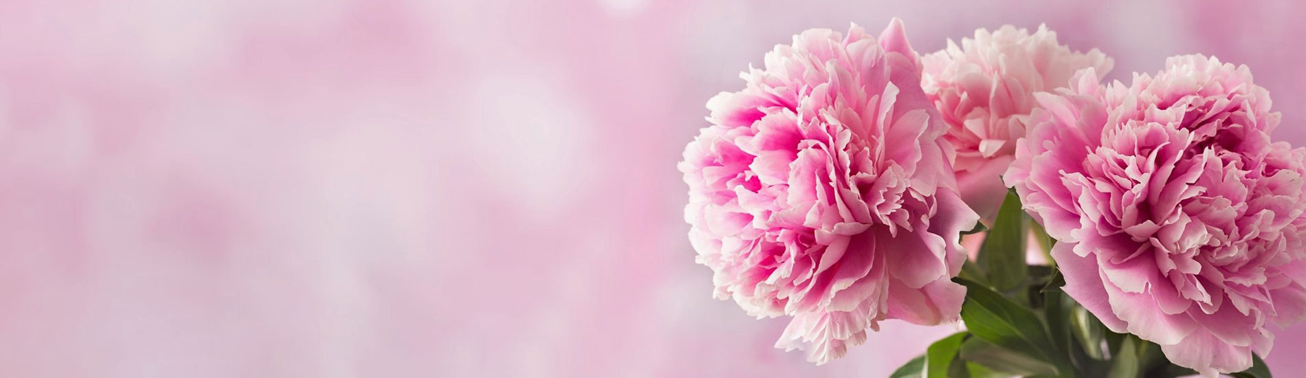 three_treasures_slider_peony_flower