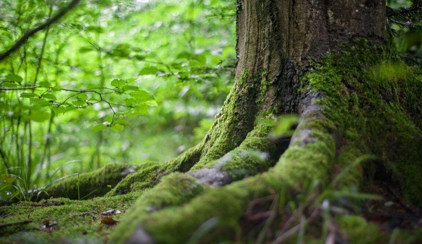 Nourish the Root® to Nourish Kidney-Yin