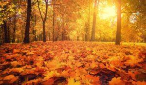 tonics_the_qi_of_autumn_controls_nourishing_and_receiving
