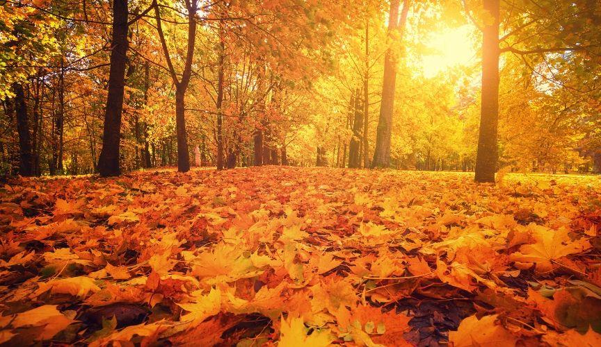 Tonics – The Qi of Autumn Controls Nourishing and Receiving